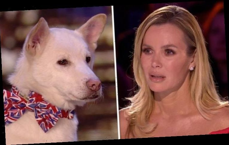 Britain's Got Talent judges in tears after act's heartbreaking story behind beloved pooch