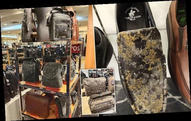 Leather bags covered in MOULD after being left untouched in Malaysia