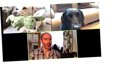 Quarantined Dogs On A Company Zoom Call Are Coronavirus Lockdown Gold