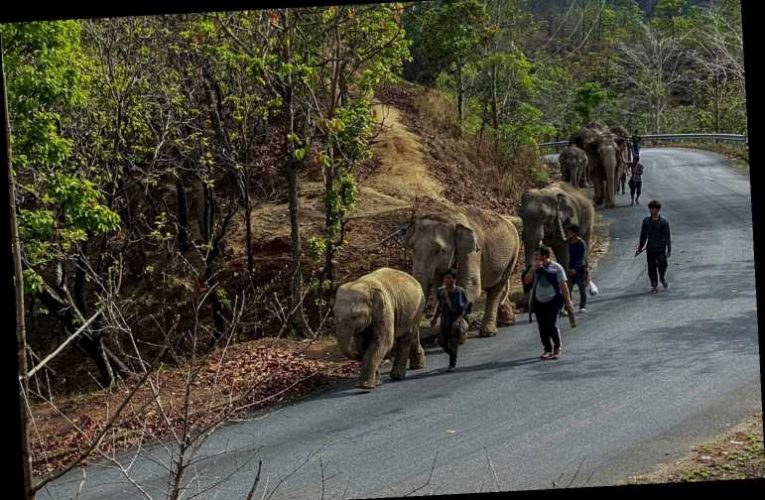 Over 100 'unemployed' Thai elephants return home amid coronavirus
