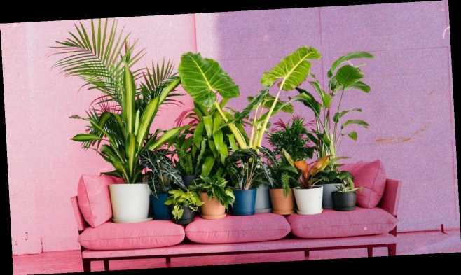 8 Tips to Keep Your Plants Thriving, According to Plant Whisperers