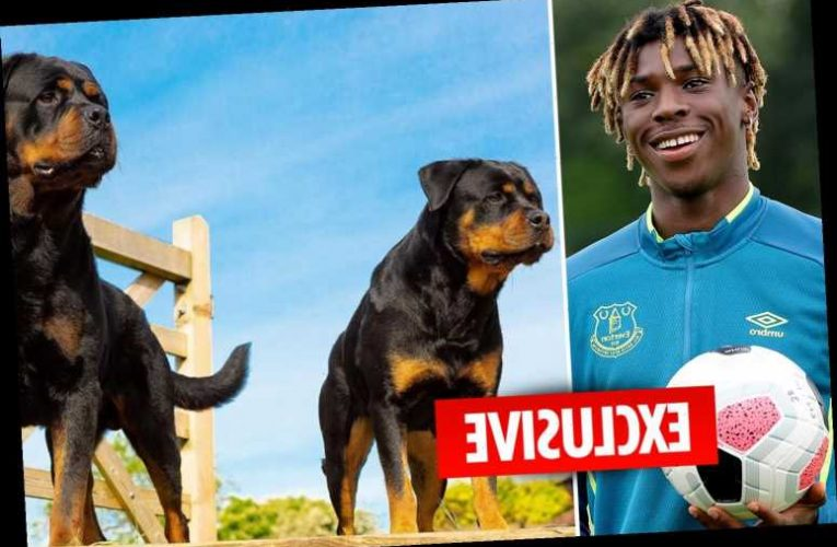 Everton star Moise Kean splashes out £30,000 on two guard dogs after Riyad Mahrez's home was raided – The Sun