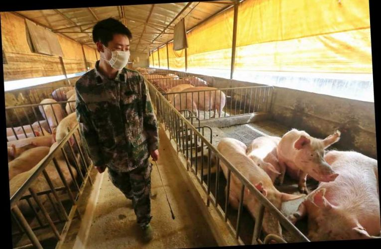 What is swine flu and how many deaths has it caused?
