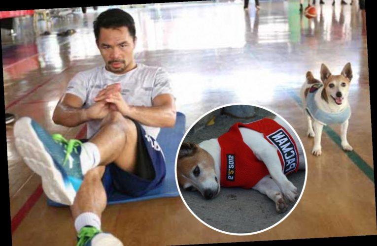 Manny Pacquiao left heartbroken after beloved pet Jack Russell terrier 'Pacman' dies aged 14 – The Sun