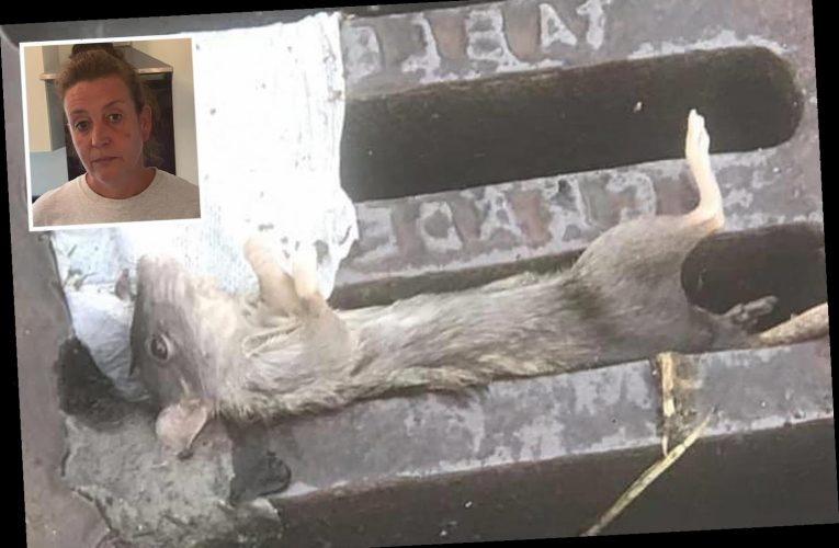 Mum's horror after flooding sends rats and human waste floating through her home