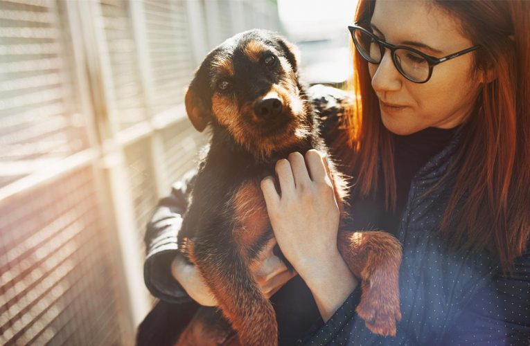 As Chewy reports earnings, coronavirus drives demand for pet supplies