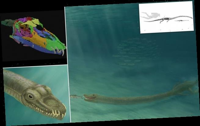 Long neck helped 242 million-year-old reptile hunt underwater