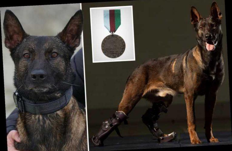 Hero dog who saved troops fighting al-Qaeda in Afghanistan to receive animal Victoria Cross