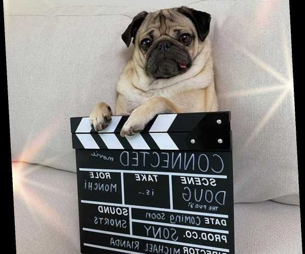 Doug the Pug Will Voice 'Every Bark, Every Snore' for Animated Dog in First Major Movie Role