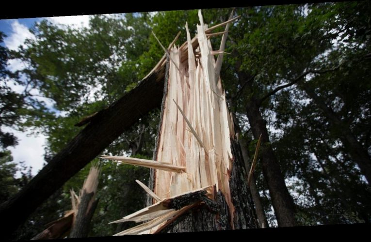 2 killed by lightning strike while cleaning up Hurricane Isaias debris in North Carolina