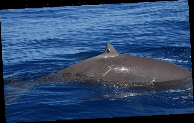 Whale records longest known dive lasting almost four HOURS