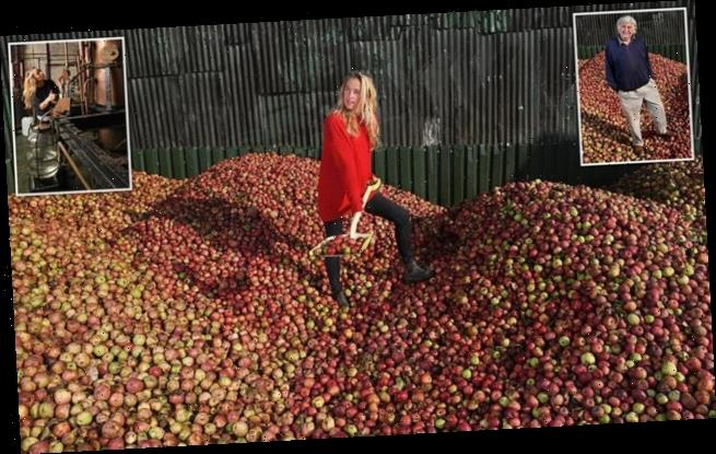 apples rot orchards chainsawed cancelled festivals cider undrunk
