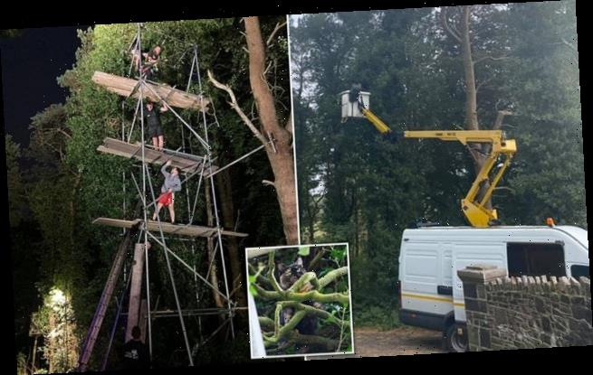 You've got to be KITTEN! World's most elaborate cat up a tree rescue