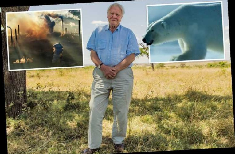 A Life On Our Planet is Sir David Attenborough's 'witness statement' — telling the world just how we're destroying it