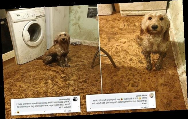 Mucky pup! Pet owner finds WHOLE kitchen covered in muddy paw prints