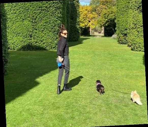 Michelle Keegan beams as she walks her dogs on Autumnal day out in Cheshire