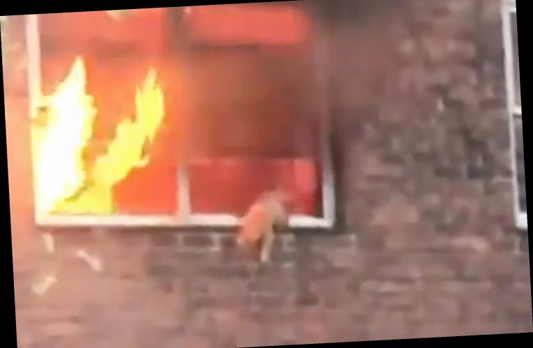 Cat takes incredible leap of faith from burning NYC apartment