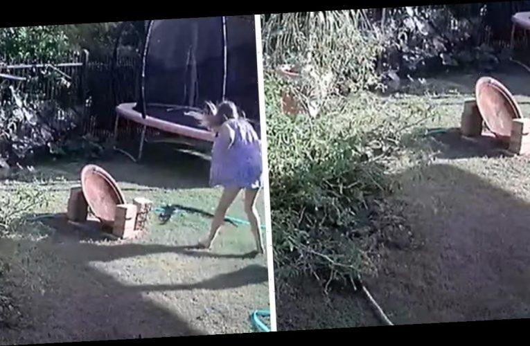 Puppy Vs Python Vs Puppy Mom Caught on Camera