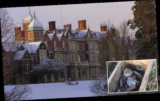SEBASTIAN SHAKESPEARE: Little Owl's death on the Queen's estate