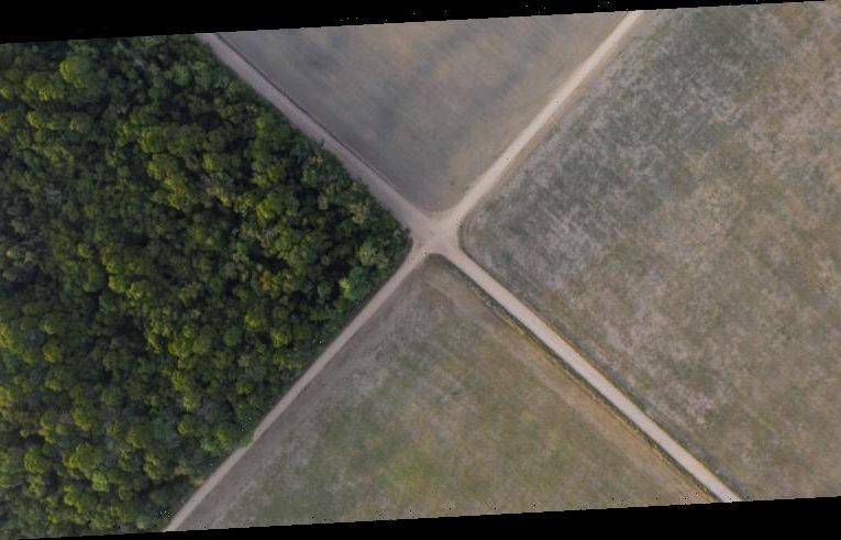 Amazon deforestation skyrockets to 12-year-high under Bolsonaro