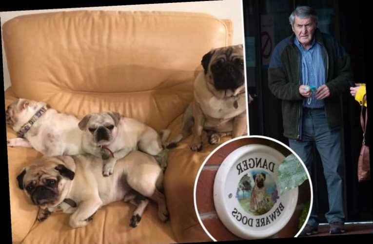 Granddad, 75, who faced having five pet pugs destroyed for nipping at postman wins court battle as he had warning sign