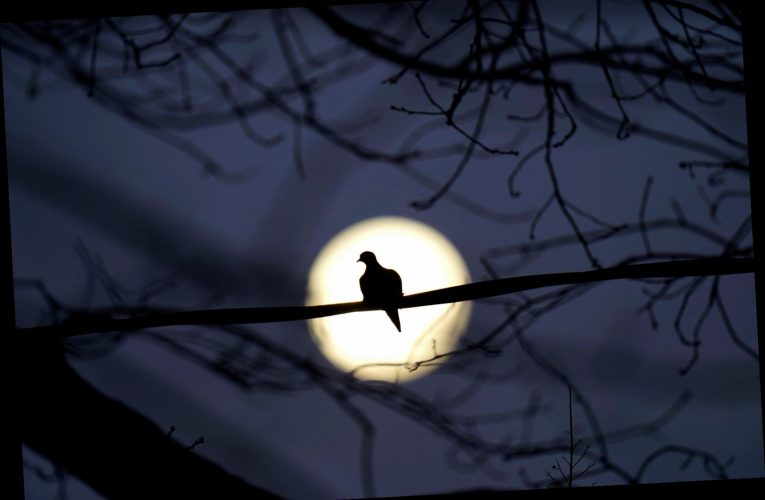 How to see tonight's Cold Moon, the last full moon of 2020