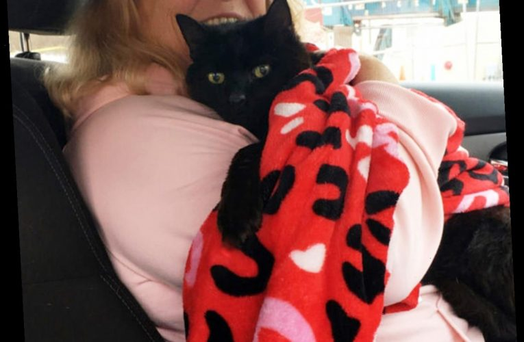 Missing 7 Years, Cat Returns Home in Time for the Holidays: 'He's Our Christmas Miracle'