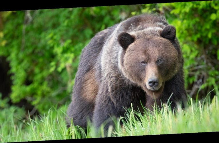California man punches 350-pound bear in face to save beloved dog 'Buddy'