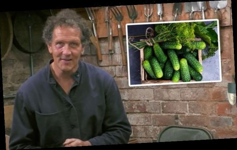Monty Don: Gardening expert shares how to grow six foot tall gherkin plants at home