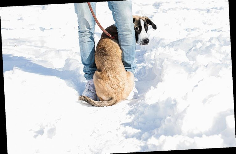 5 Expert Tips to Help Pet Owners Keep Their Dogs Happy, Healthy, and Warm All Winter Long