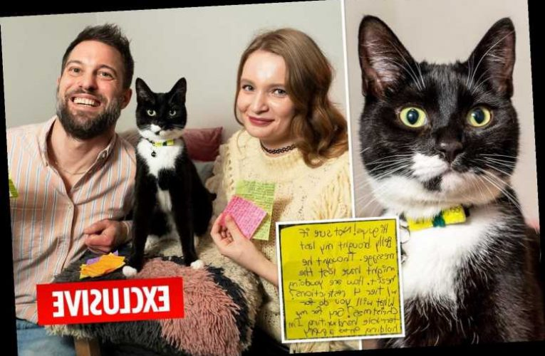 Rescue cat raises couple's Covid-19 lockdown spirits by carrying letters to neighbours in his collar