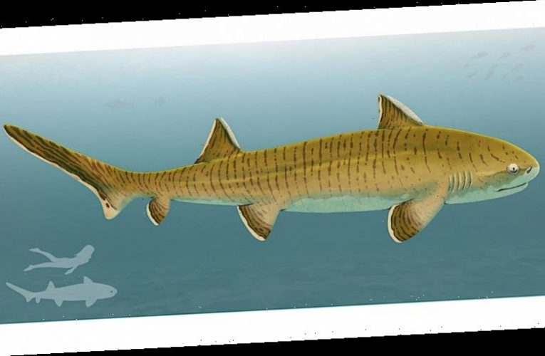 'Almost complete' 150M year-old shark discovered gives experts look into Earth's distant past