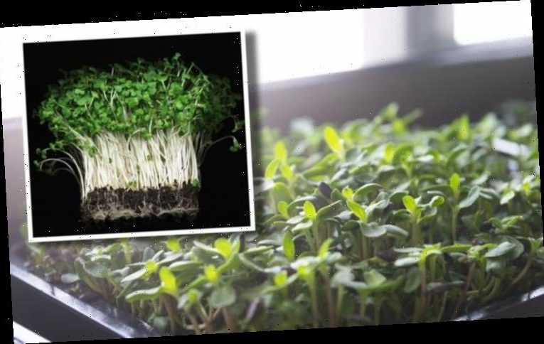 How to grow watercress – the plant packed full of vitamins