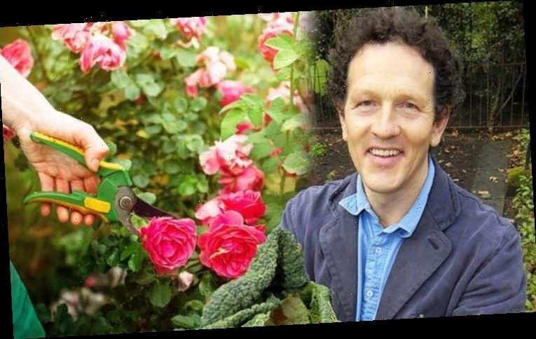 Monty Don: Gardening expert shares how to prune roses and help 'new growth'
