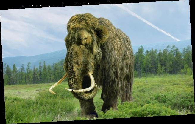 Humans 'hastened collapse and extinction' of the woolly mammoth