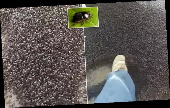 Look away now: Millions of giant beetles terrorise a home