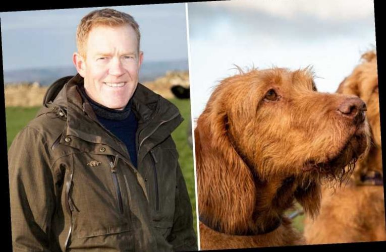 Countryfile's Adam Henson left with 'a hole in his heart and his home' as beloved dog dies