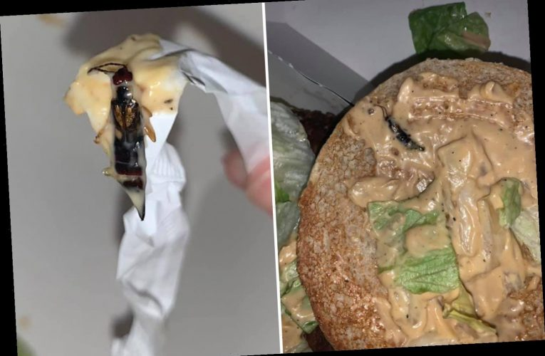 McDonald's customer 'knocked sick' after finding 'INSECT in Big Tasty burger'