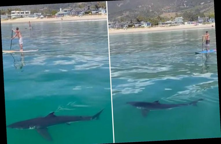 Chilling clip shows 'great white shark' lurking dangerously close to oblivious paddleboarders in California