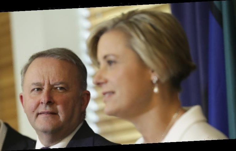 Albanese to unveil plan for contractors after Keneally goes on attack