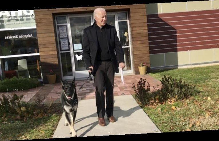 Joe Biden's dog Major bites again