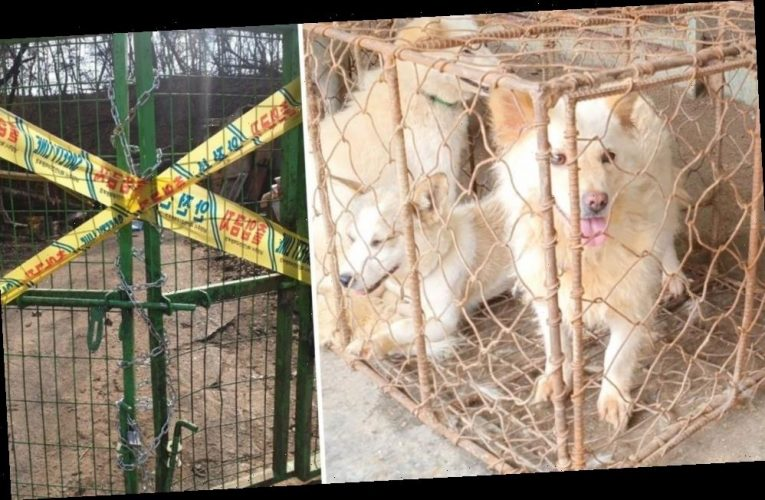 One of South Korea's Largest Dog Meat Auction Houses Closes After Investigation