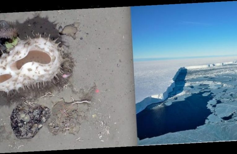 After a massive iceberg broke away from Antarctica, it revealed a long-hidden world of creatures on the seafloor
