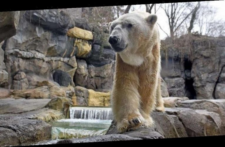 1 of America's oldest polar bears dies after outliving average life expectancy by 10 years