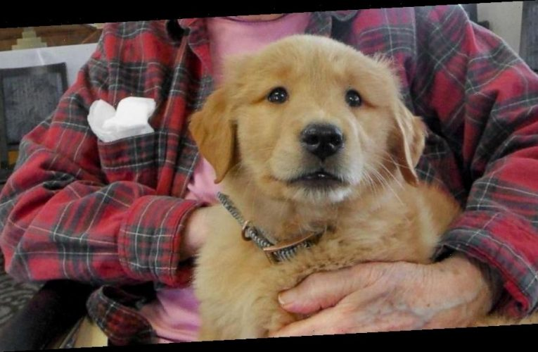 This nursing home has its own golden retriever puppy