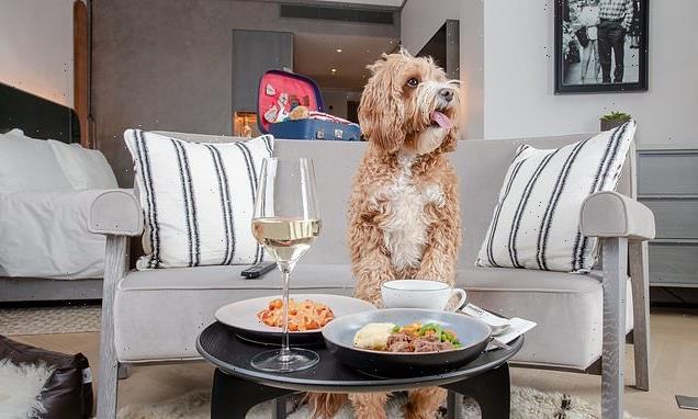 BONE appétit! Hilton unveils new dog menu across 32 of its hotels