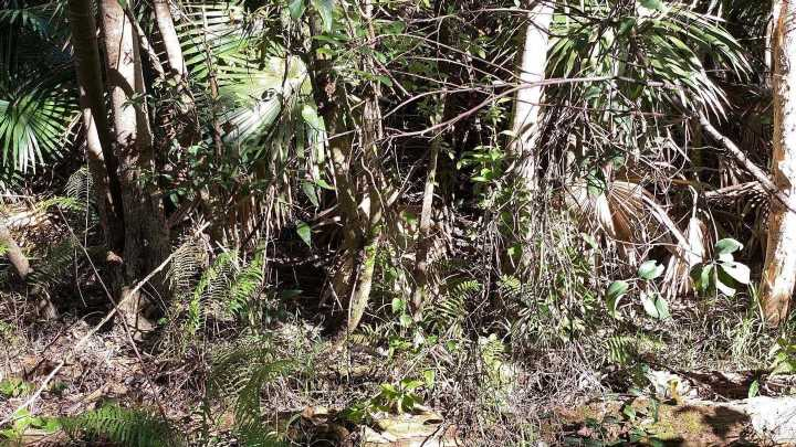 Can you spot the camouflaged snake whose venom can kill a human in 45 mins?