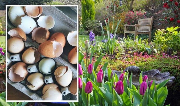 Gardening: How to use leftover egg shells and coffee grounds in your garden