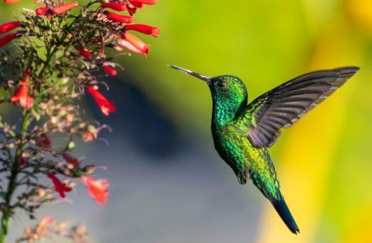 Here's What You Need To Plant In Your Garden To Attract Backyard Birds