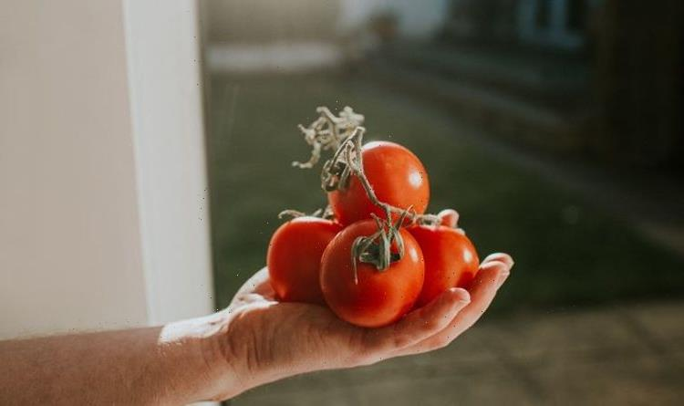 How to grow tomatoes – tips for growing and harvesting tomatoes